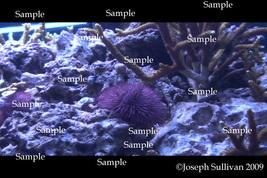 Sea Urchin Freebie Computer Wallpaper Digital Download - $0.00