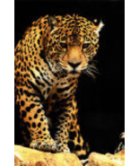 bring home a needy spirit animal dragon khodam fairy elf djinn watcher tiger - $9.99