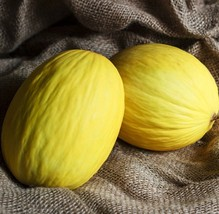 Melon Seeds - Crenshaw - Outdoor Living - Vegetable Seeds - FREE SHIPPING - $30.99+