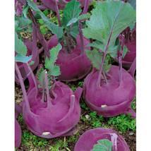 4 Variety Seeds - Purple Vienna Kohlrabi Seeds #IMA41 - $12.99+