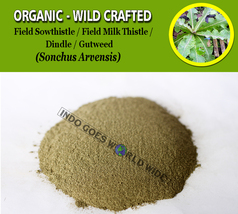 POWDER Field Sowthistle Dindle Gutweed Swine Thistle Corn Sow Sonchus Ar... - $7.99+