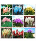 400pcs/bag pampas grass plant,Ornamental Plant Flowers Cortaderia - $4.99