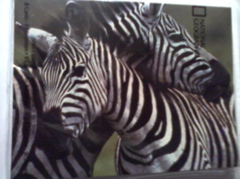 NATIONAL GEOGRAPHIC ZEBRA 8 BLANK NOTE CARDS BLACK WHITE  - $9.95