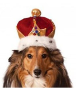 King's Crown Pet Costume for Dogs  - $4.00