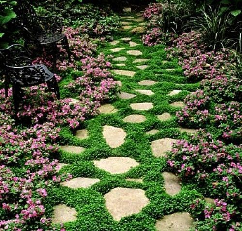 200Seeds Dichondra Repens Seeds- Green Ground Cover