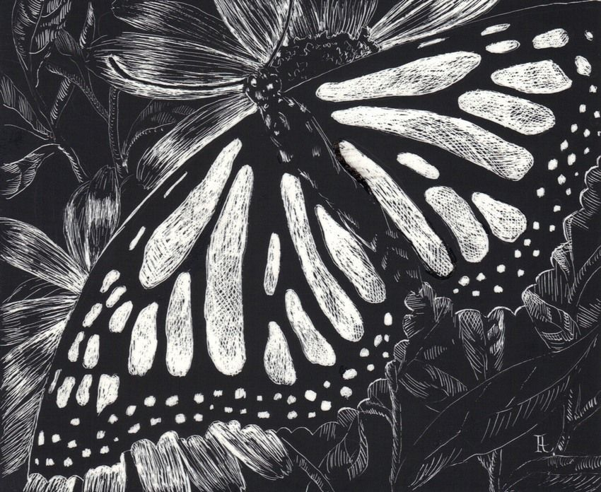 "Akimova: MONARCH BUTTERFLY, scratch paper, black and white, 5""x4"""