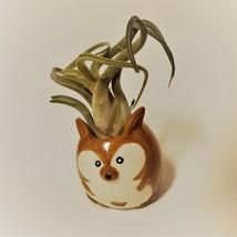 "Kangaroo Pot with Curly Air Plant, Ceramic Animal Planter 2"", Live Tillandsia image 2"