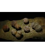 Rare Latvian Shamanic Star Stones Baltic Shaman Stones Vortex Stones by izida - $57.00