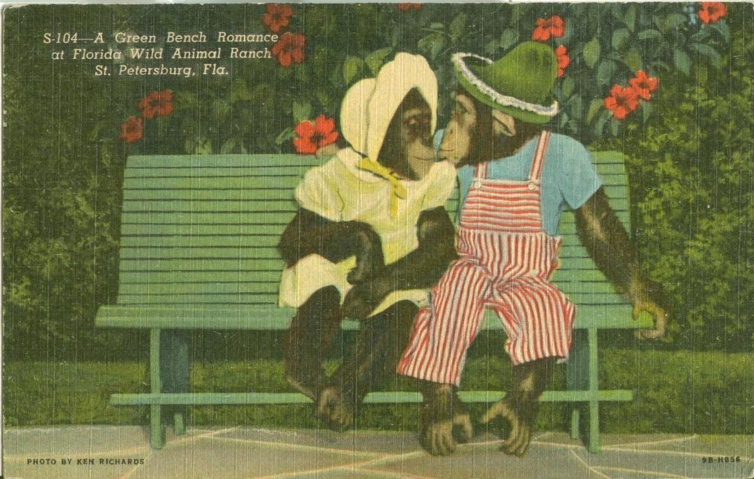 A Green Bench Romance at Florida's Wild Animal Ranch, St. Petersburg, postcard