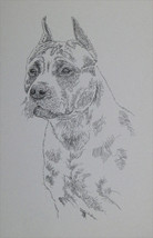 American Staffordshire Terrier Dog Art Portrait #50 Kline adds dog name ... - $49.45