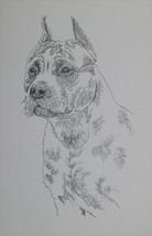 American Staffordshire Terrier Dog Art Portrait... - $49.45