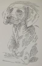 Weimaraner Dog Art Portrait #38 WORD DRAWING Kl... - $49.45