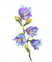 "Akimova: BELL FLOWER, colored pencils,garden,5.25""x6"" - $9.00"