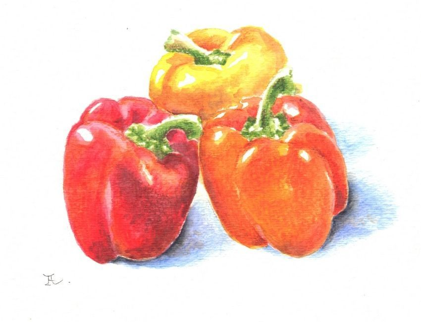 "Akimova: PEPPERS, colored pencils,vegetable, food, 5""x6"""