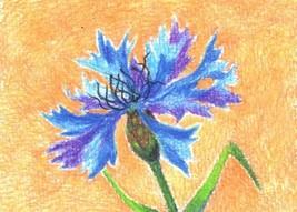 """Akimova: CORNFLOWER, flower, garden, blue,  ACEO, 2.5""""x3.5"""" - $3.50"""