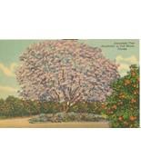Jacaranda Tree Acutifolia, in full bloom, Florida, unused linen Postcard  - $4.99