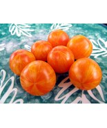 Starfire Isis - Perhaps the world's most beautiful cherry tomato, J&L va... - $3.75