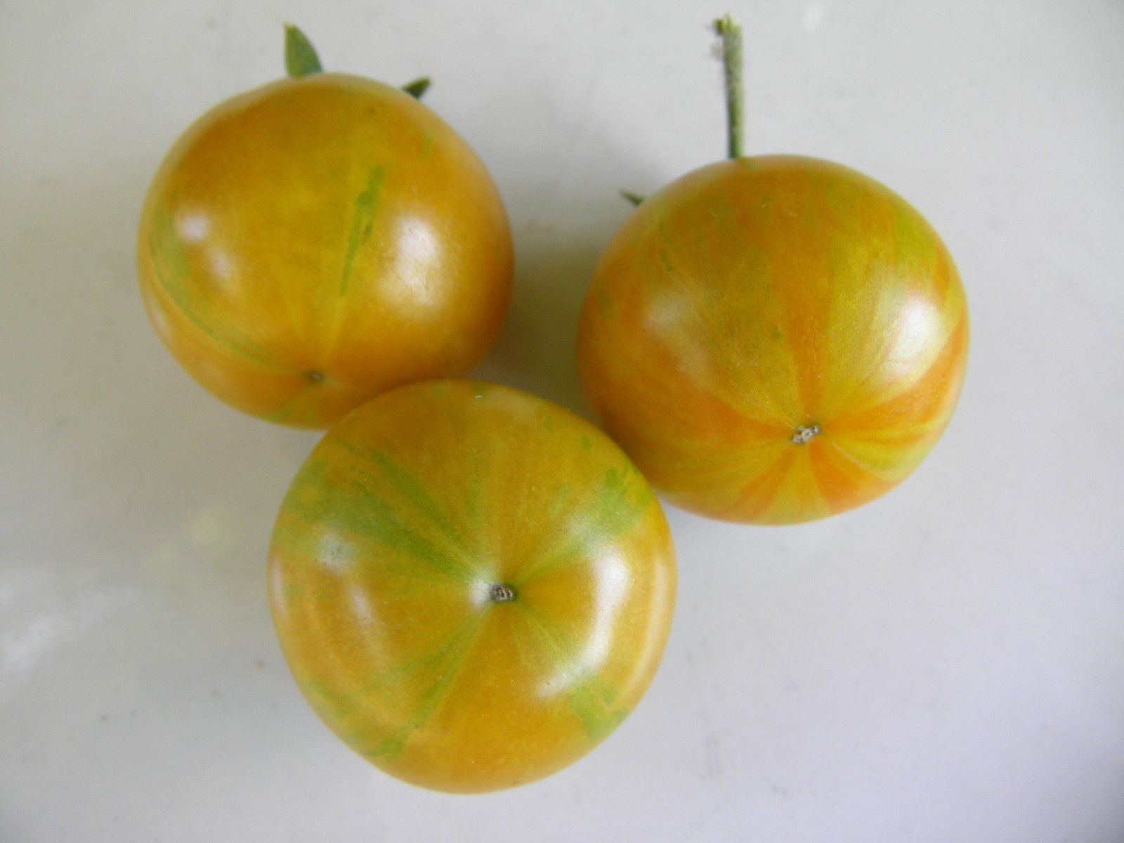 Starfire Isis - Perhaps the world's most beautiful cherry tomato, J&L variety