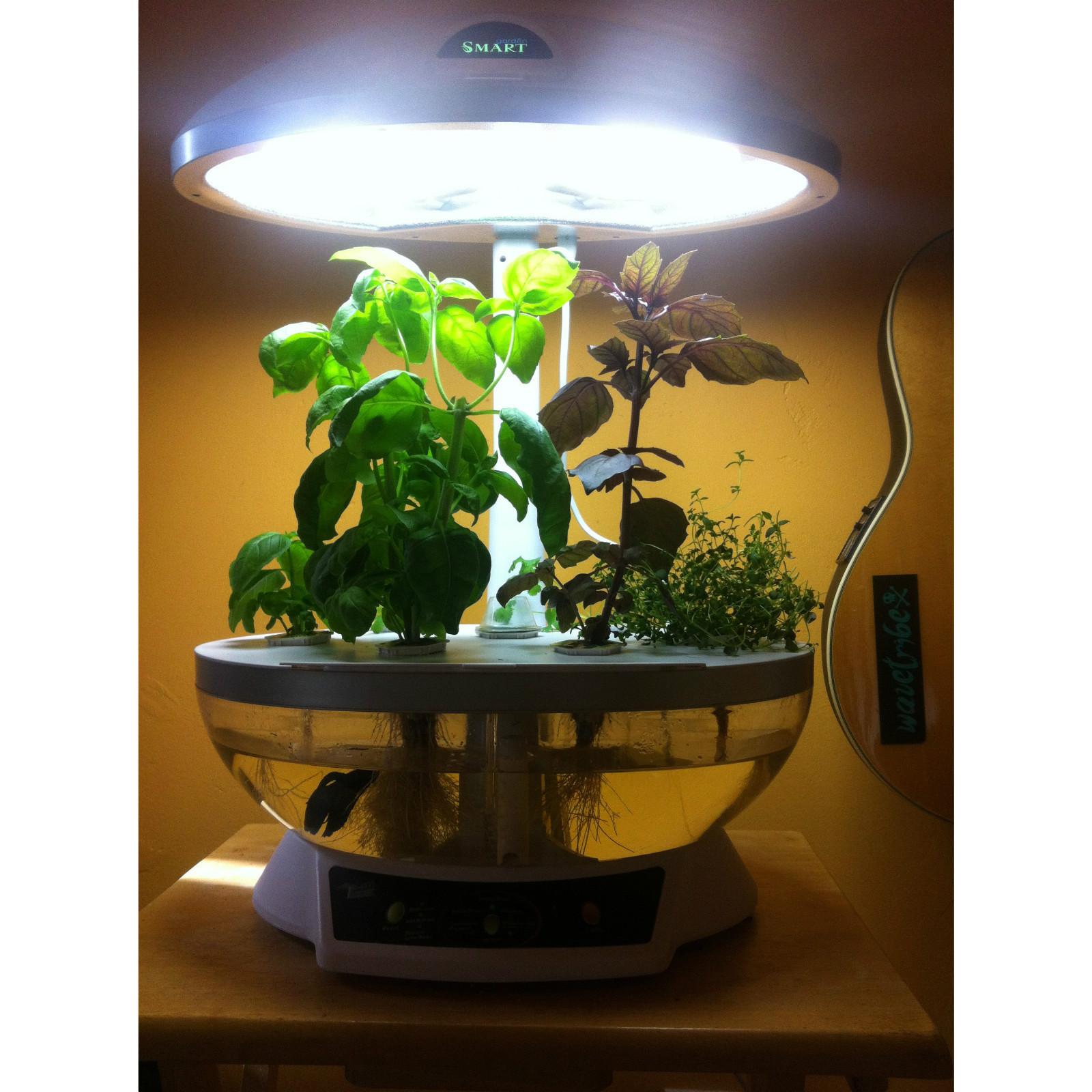 Aquaponics system fish tank aquarium organic hydroponic for Fish tank planter