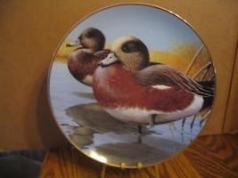 """Rod Lawrences Amer. Widgeon"""" American Waterbirds Series - $37.39"""