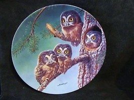 "Joe Thornbrugh's ""Out on a Limb:Great Gray"" series Baby Owls of N. Ameri... - $25.23"