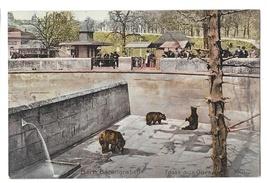 Berne Switzerland Barengraben Fosse aux Ours Bear Pit Park Vintage Postcard - $4.99