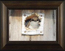 Peek A Boo By Todd Thunstedt 20x26 Wildlife Wren Bird House Framed Art P... - $69.00
