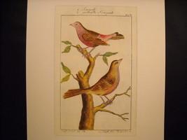 Vintage Color Bird Reprint Poster 18th 19th Century by Senegali Gestreiste