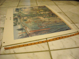 1977 British Museum of Natural History Poster Mounted on Frame Core image 2
