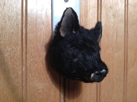 Black Furry Pig Head Magnet Recycled Rabbit Fur by Lifes Attractions