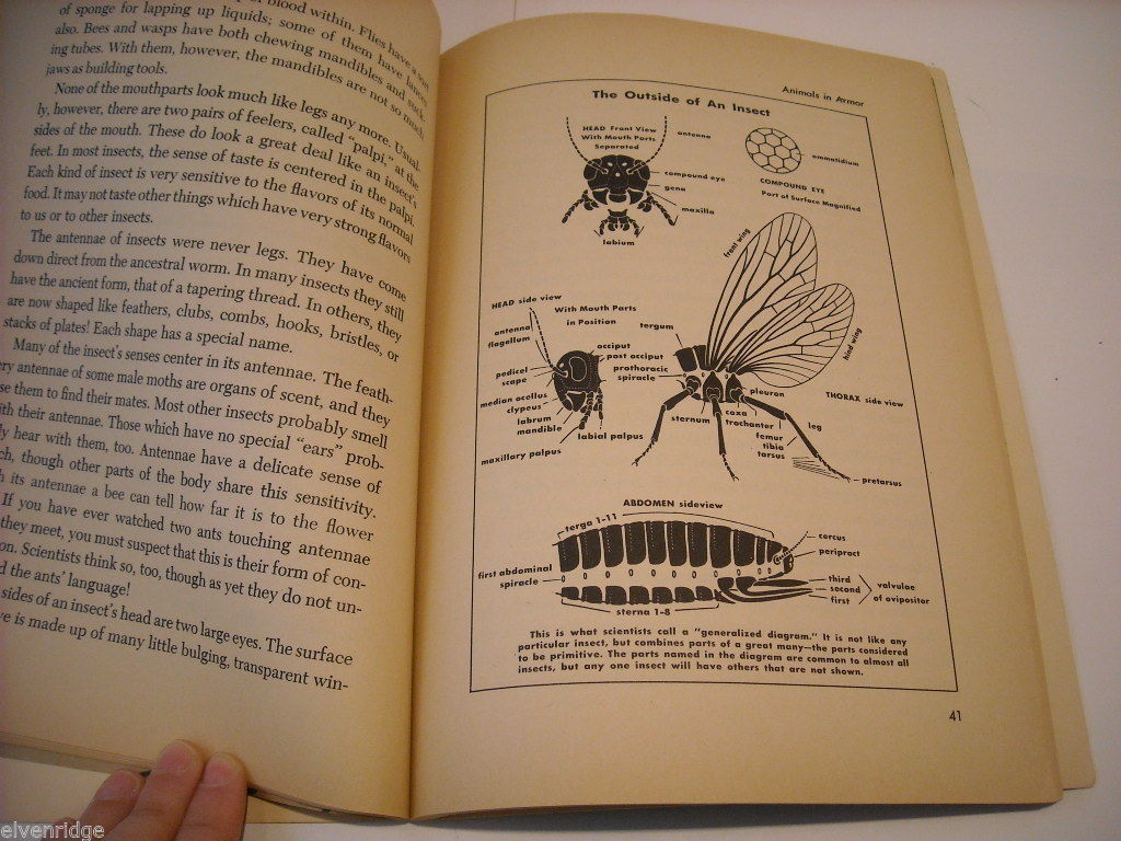 Children's Softcover Book- Insects- Question and Answer