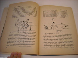Children's Softcover Book- Insects- Question and Answer image 3