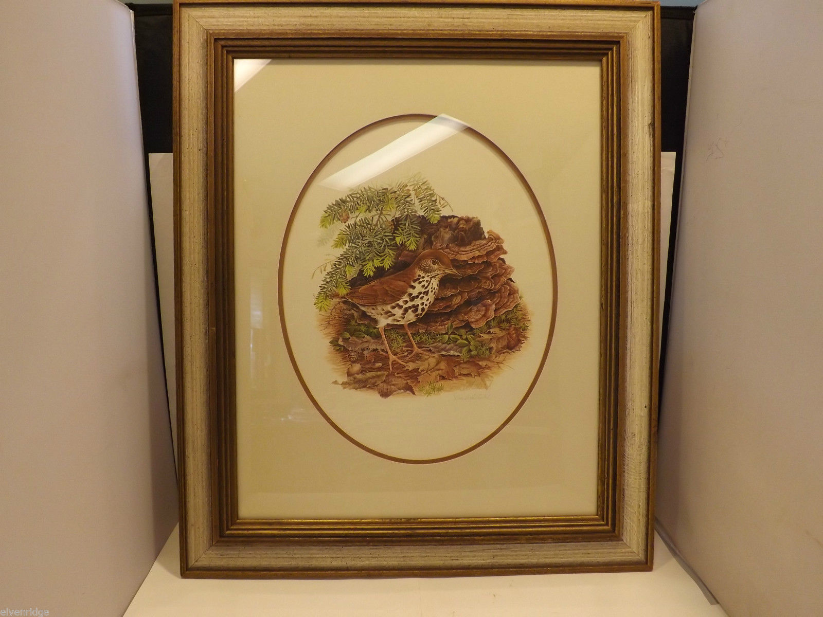 Framed Drawing of a Wood Thrush Bird in Wooden Scenery Signed by Artist