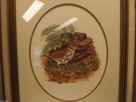 Framed Drawing of a Wood Thrush Bird in Wooden Scenery Signed by Artist image 2