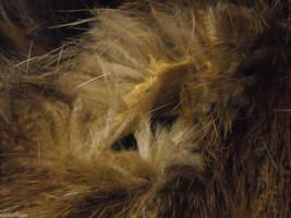 Full length Long hair Beaver coat image 2