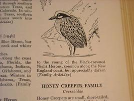 Illustrated Encyclopedia of American Birds 1944 1st ed image 9