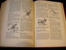 Illustrated Encyclopedia of American Birds 1944 1st ed image 11