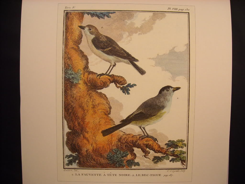 Vintage Color Bird Reprint Poster La Fauvette Le Bec 18th 19th Century French