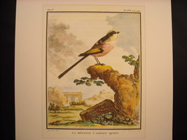 Vintage Color Bird Reprint Poster La Mesange a Longue Queue 18th 19th Century