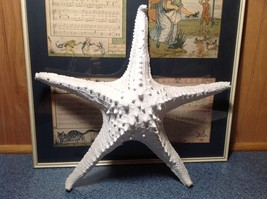 Large White Resin Handmade Sea Star Wall Ornament Starfish