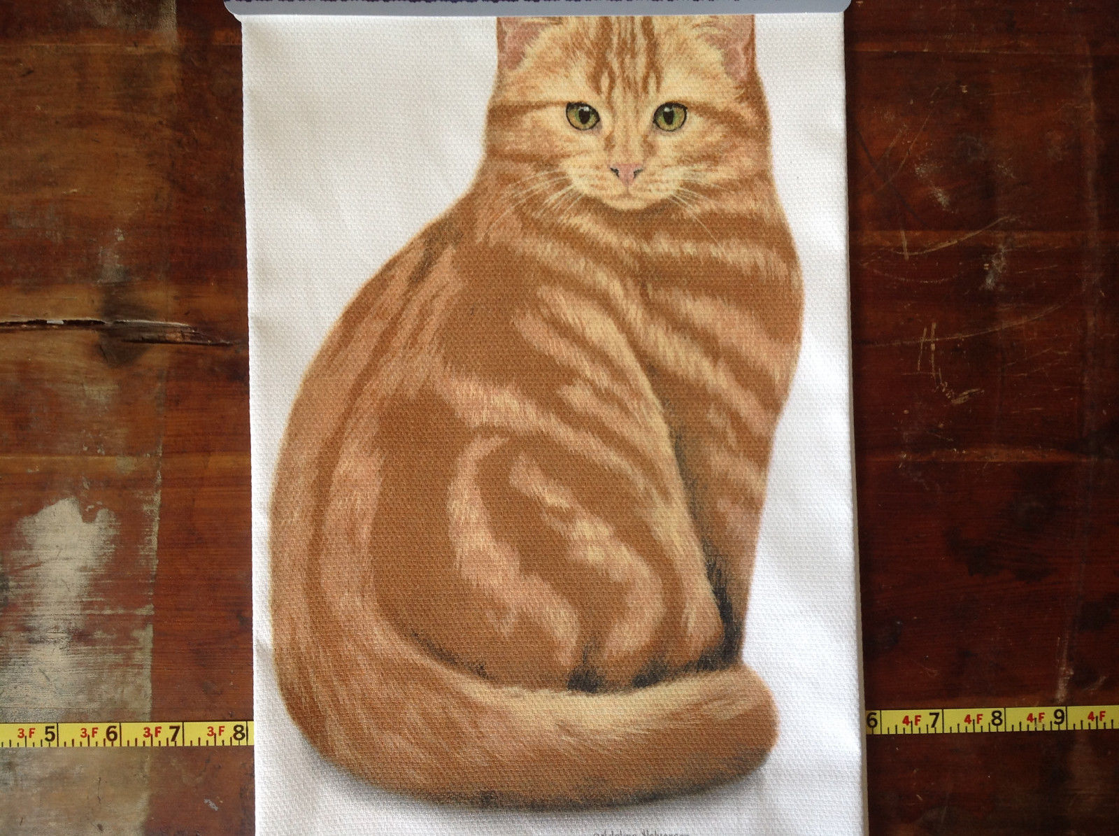 Orange Tabby White Background Dish Towel by Fiddlers Elbow Tag Attached