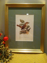 Print of Nightingale from The Most Beautiful Birds Framed Wall Art - Italy 1960