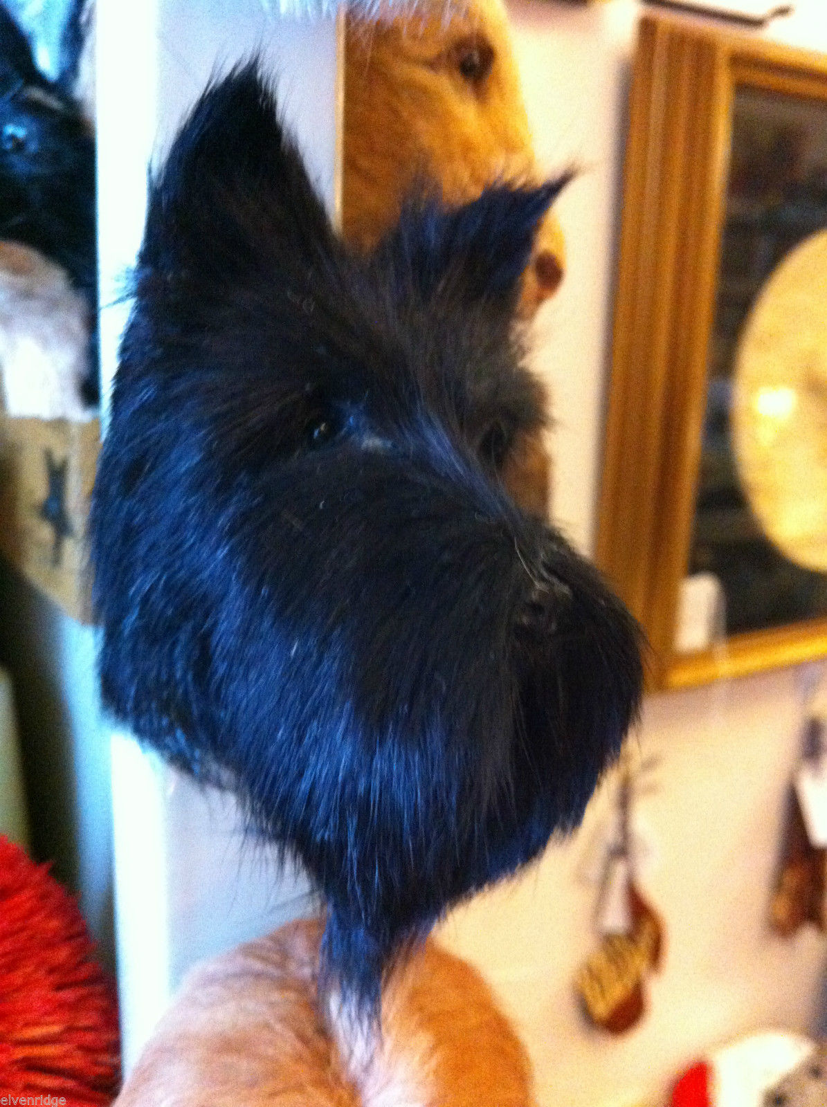 Traditional Scottish Terrier Scottie dog  furry refrigerator magnet in 3D