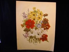 Vintage Floral Print Loudon Florals 1783-1834 no 1087