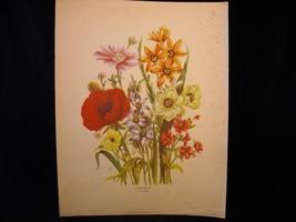 Vintage Floral Print Loudon Florals 1783-1834 no 1086