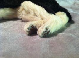 Siberian Husky chewing on stick - Dog Figurine - recycled rabbit fur image 5