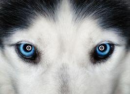 vjkr Werewolf Imprinting Bonding Love Spell Obsession Passion Magick Hau... - $159.00