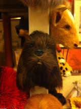 Brown Cocker Spaniel furry dog refrigerator magnet in 3D image 3