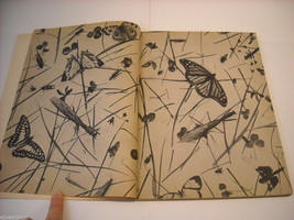 Children's Softcover Book- Insects- Question and Answer image 7