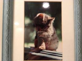 Cute Framed Photo of Kitten in Light Blue Wood Frame by Linda Hubbard image 2